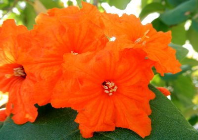 orange-geiger