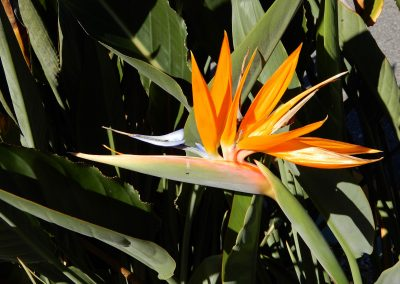 bird-of-paradise-2000